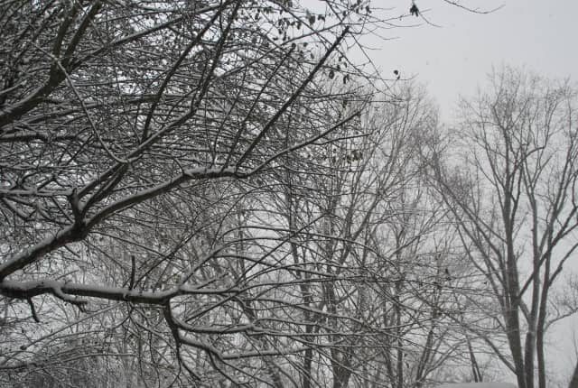 Wednesday's nor'easter is bringing snow and wind to the Hudson Valley. Show us your snow pictures.