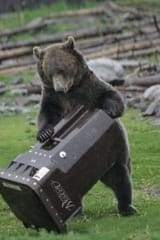 Bear Fact: Bring Bird Feeders Inside, Rutherford, As Bruins Return